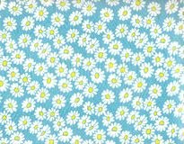 Daisy background. Stock Images