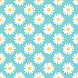 Daisy Background Lizenzfreie Stockbilder