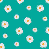 Daisy Background blanche Photographie stock libre de droits