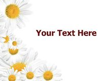 Daisy Background, Summer or Spring Seasonal Royalty Free Stock Photography