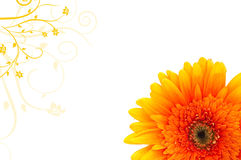 Daisy banner. Orange daisy flower with ornaments on white Royalty Free Stock Images