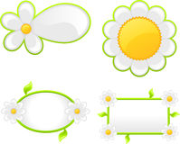 Daisy Banner Royalty Free Stock Photos