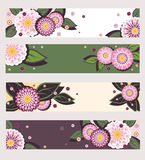 Daisy banners Royalty Free Stock Photo