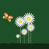 Daisy and beauty butterfly with green Royalty Free Stock Images