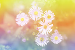 Daisy and bee with colourful Royalty Free Stock Photo