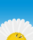 Daisy and bees card Stock Photo