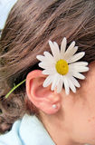 Daisy behind ear. Close up of a female ear holding a daisy Royalty Free Stock Photos