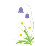 Daisy and bell-flower. Illustration of daisy and bell-flower Stock Images