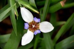Daisy bloem met mooie vorm Stock Afbeelding