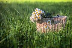 Daisy bloemen in houten zak stock foto's