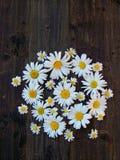Daisy bloemen op donkere lijst Stock Foto