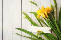 Daisy bloemen op witte achtergrond selectieve DOF stock afbeeldingen