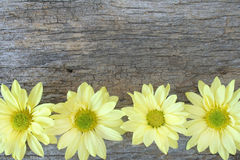 Free Daisy Boarder Royalty Free Stock Images - 7494139
