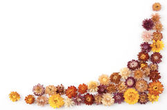 Daisy border. Colorful daisy border on the whtie background stock photography