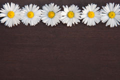 Daisy border Royalty Free Stock Photo