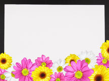 Daisy Border 2 Royalty Free Stock Photography