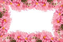 Daisy border or frame Stock Image