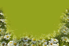 Daisy Border Green Royalty Free Stock Images