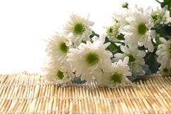 Daisy bouquet Royalty Free Stock Photos