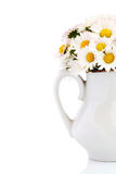 Daisy bouquet. Bouquet of fresh wild daisies in vase isolated on white royalty free stock photos