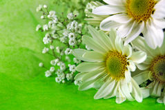 Daisy Bouquet Stock Photo