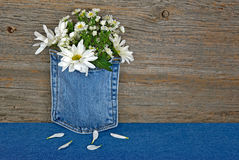 Daisy bouquet in blue jean pocket Royalty Free Stock Images