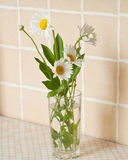 Daisy bouquet Stock Photography