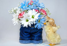 Daisy bouquet with duckling Royalty Free Stock Images