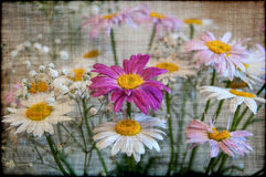 Daisy bouquet flowers grunge Royalty Free Stock Photos