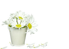 Daisy bouquet in metal bucket Royalty Free Stock Image