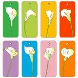 Daisy bouquet pattern Royalty Free Stock Photos