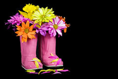 Daisy bouquet in pink rain boots Stock Images