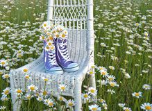 Daisy bouquet in purple sneakers Royalty Free Stock Photos