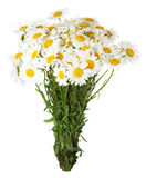 Daisy bouquet on the white background Royalty Free Stock Image