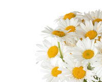 Daisy bouquet on the white background.  Stock Photo