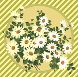 Daisy bouquet Royalty Free Stock Photography