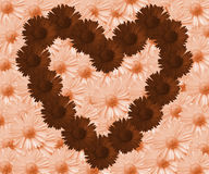 Daisy Brown Heart. Dark, brown flowers arranged in heart shape. Brighter, creme coloured flowers in the background Stock Image