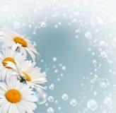 Daisy and bubbles Stock Photo