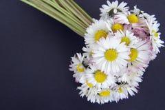 daisy bukiet kwiatów Fotografia Royalty Free