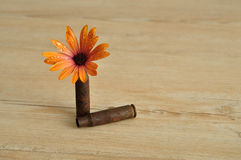 Daisy and bullet. An orange daisy displayed in a rusty riffle bullet symbolizing flower power Stock Images