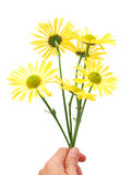 A daisy bunch. Holding daisy bunch in mother day Stock Photo