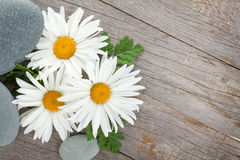 Daisy camomile flower and sea stones Stock Photo