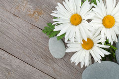 Daisy camomile flowers and sea stones Royalty Free Stock Photos