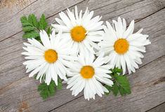Daisy  camomile flowers on wooden background Stock Photo