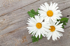 Daisy camomile flowers on wooden background Royalty Free Stock Photography