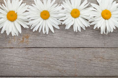 Daisy camomile flowers on wooden background Stock Photography