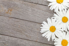 Daisy camomile flowers on wooden background Stock Images
