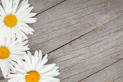 Daisy camomile flowers on wooden background Royalty Free Stock Images