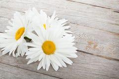 Daisy camomile flowers on wooden table Stock Photos
