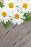 Daisy camomile flowers on wooden table Stock Image